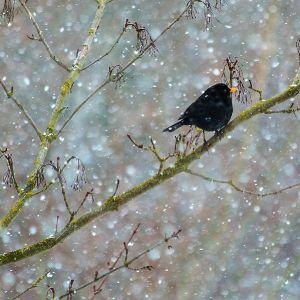 Schneefall by Sylvia Kroll