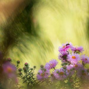 Die Wespe by Sylvia Kroll