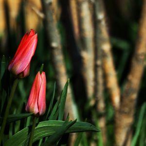 Frühlingsgruss by Sylvia Kroll