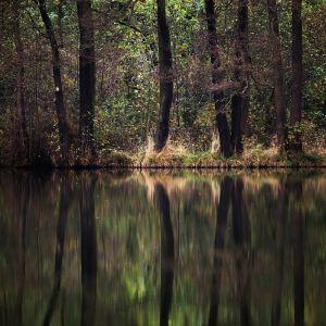 Waldsee by Sylvia Kroll