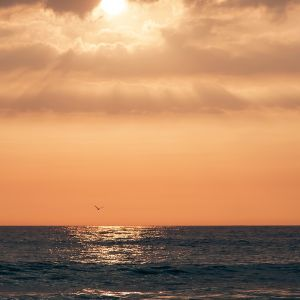 im Sonnenuntergang Sylvia Kroll