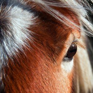 Pony by Sylvia Kroll