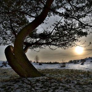 Der Sonne entgegen by Sylvia Kroll
