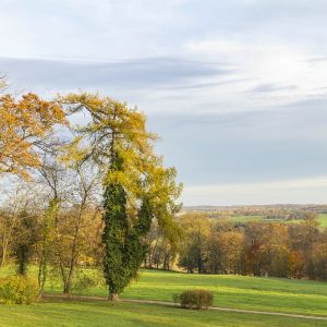 Herbst  Hohenzieritz Schloßpark-1-3