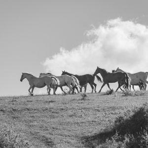 Pferde in Mecklenburg