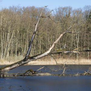 Chemnitzer See (5)